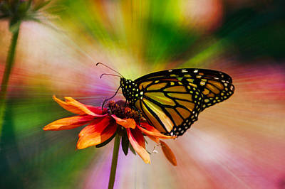 Mixed Media - Summer Floral With Monarch Butterfly 03 Prism by Thomas Woolworth