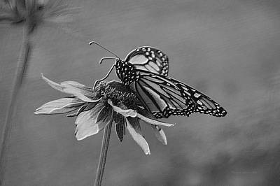 Invertebrates Mixed Media - Summer Floral With Monarch Butterfly 04 Bw by Thomas Woolworth