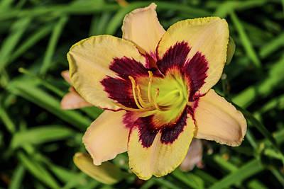 Photograph - Summer Flower by Britten Adams