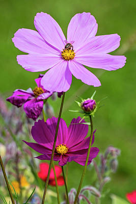 Photograph - Summer Flowers by Arterra Picture Library