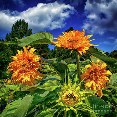 Photograph - Summer Flowers At Hershey by Nick Zelinsky