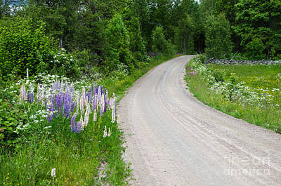 Photograph - Summer Flowers By A Country Road by Kennerth and Birgitta Kullman