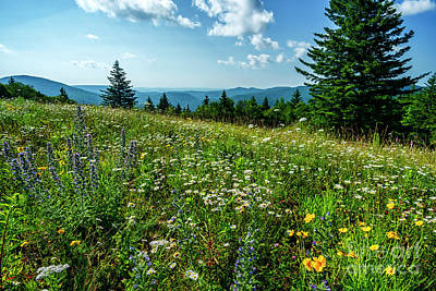 Photograph - Summer Flowers In The Highlands by Thomas R Fletcher