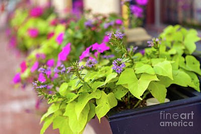 Photograph - Summer Flowers In Window Box by George Sheldon