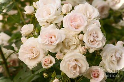 Photograph - Summer Flowers by Isusko Goldaraz