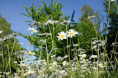 Art Print featuring the photograph Summer Flowers by Kennerth and Birgitta Kullman