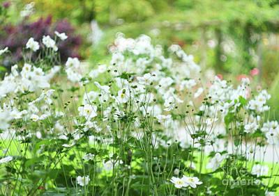 Photograph - Summer Flowers by Nicholas Burningham