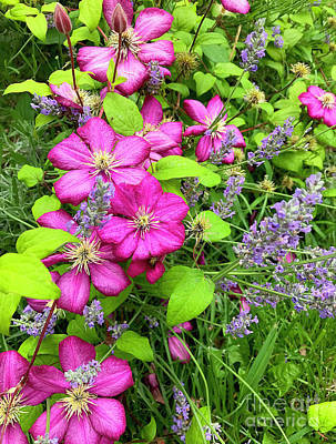 Photograph - Summer Flowers by Todd Breitling