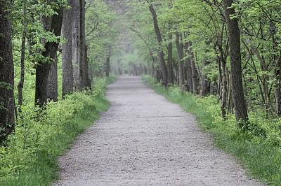 Photograph - Summer Forest Path by Dan Sproul