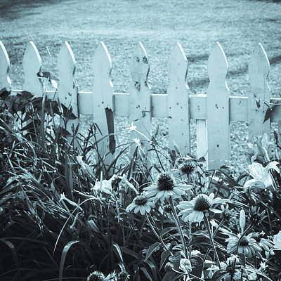 Photograph - Summer Garden Cyanotype Square by Marianne Campolongo