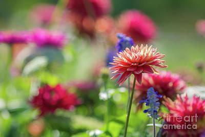 Photograph - Summer Garden by Eva Lechner
