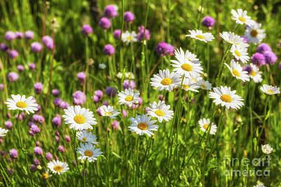 Flower Gardens Photograph - Summer Garden by Veikko Suikkanen