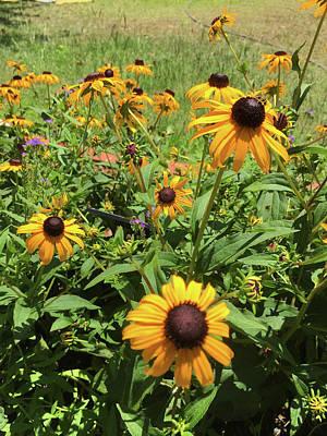 Photograph - Summer Gardens by Matthew Seufer