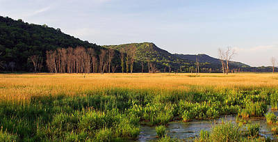Wildlife Area Photograph - Summer Gold by Bill Morgenstern
