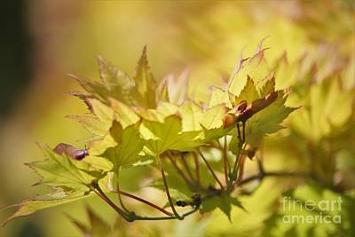 Photograph - Summer Gold by Sheila Ping