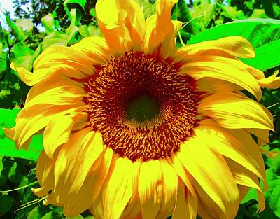 Photograph - Summer Gold by Stephanie Moore