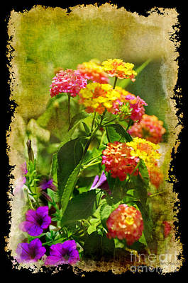 Photograph - Summer Lantana - Digital Paint 6 by Debbie Portwood