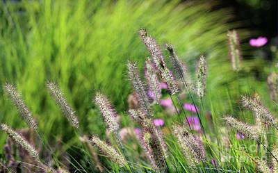 Photograph - Summer Breeze by Karen Adams