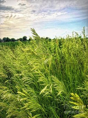 Photograph - Summer Grass by Luther Fine Art