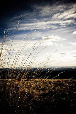 Photograph - Summer Grass by Scott Sawyer