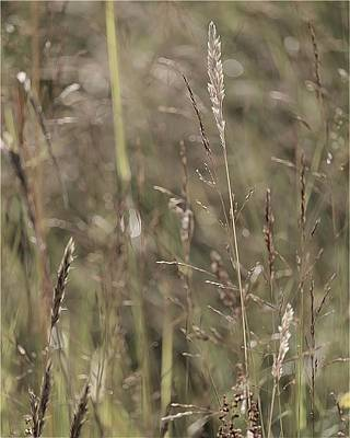 Photograph - Summer Grasses 2 by I'ina Van Lawick