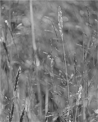 Photograph - Summer Grasses by I'ina Van Lawick