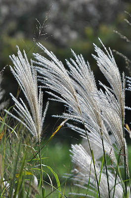 Photograph - Summer Grasses by Jan Amiss Photography