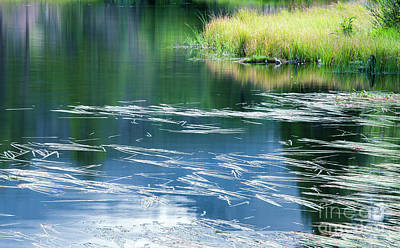 Photograph - Summer Grasses On Sprague Lake by The Forests Edge Photography - Diane Sandoval