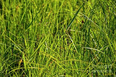 Photograph - Summer Green by Elaine Mikkelstrup