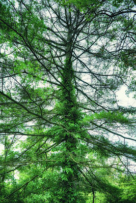 Landscape Photograph - Summer Greenery by Lilia D