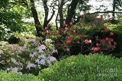Photograph - Summer Greens by Susan Herber