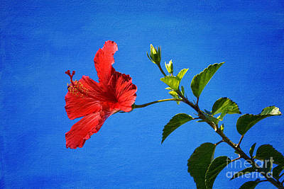 Photograph - Summer Hibiscus by Diane Macdonald