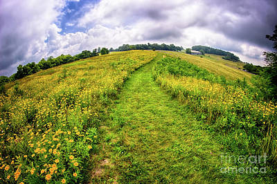 Photograph - Summer Hike Through Blue Ridge Flowers by Dan Carmichael