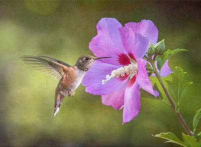 Rose Of Sharon Photograph - Summer Humming by Angie Vogel