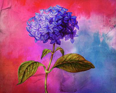 Digital Art -  Summer Hydrangea by Terry Fleckney