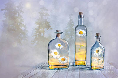 Daisies Digital Art - Summer In A Bottle by Veikko Suikkanen