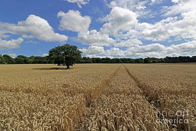 Photograph - Summer In Surrey Countryside by Julia Gavin