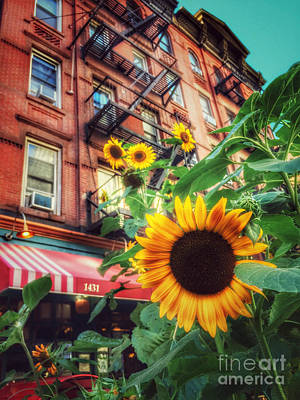 Photograph - Summer In The City - Sunflowers by Miriam Danar
