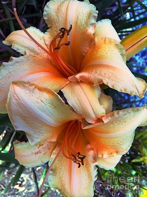 Photograph - Summer In The Garden by Leslie Hunziker