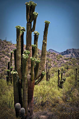 Photograph - Summer Is Calling In The Sonoran by Saija Lehtonen