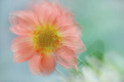 Photograph - Summer Joy by Jenny Rainbow