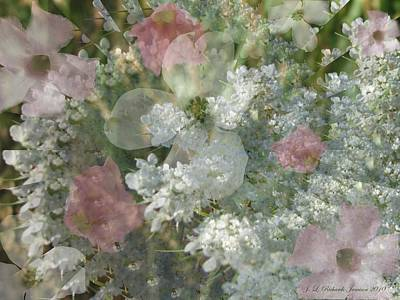 Photograph - Summer Lace by Jennie  Richards