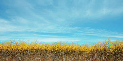 Photograph - Summer Landscape With Yellow Grass by Ben and Raisa Gertsberg