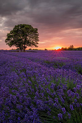 Photograph - Summer Lavender by Kelvin Trundle
