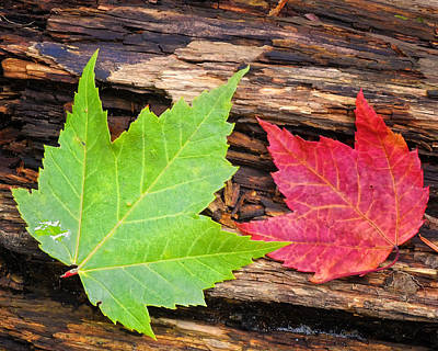 Photograph - Summer Leaves by Peg Runyan