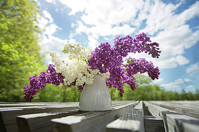 Photograph - Summer Lilacs by Sue Collura