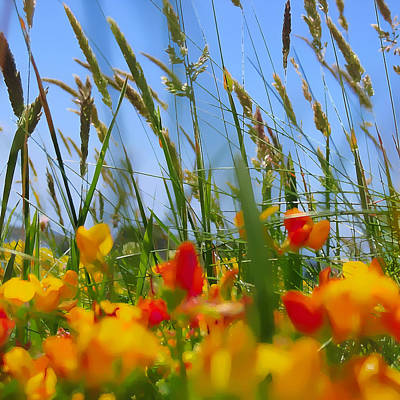 Photograph - Summer - Lying In The Meadow by Menega Sabidussi