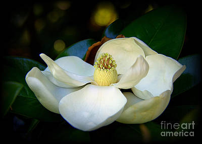 Photograph - Summer Magnolia by Lisa L Silva