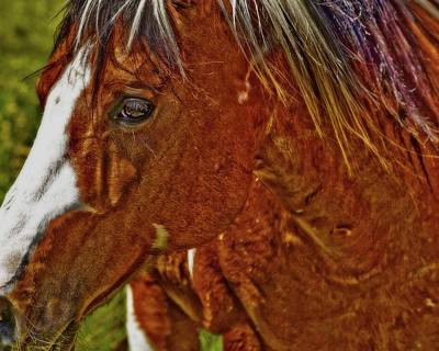 Photograph - Summer Mare by Amanda Smith