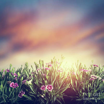 Background Photograph - Summer Meadow Flowers In Grass At Sunset. Vintage by Michal Bednarek